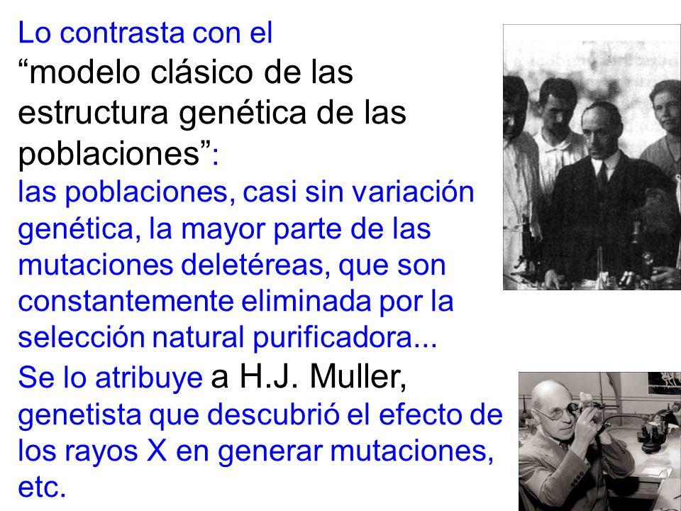 Lo contrasta con el modelo clásico de las estructura genética de las poblaciones : las poblaciones, casi sin variación genética, la mayor parte de las mutaciones deletéreas, que son constantemente eliminada por la selección natural purificadora...