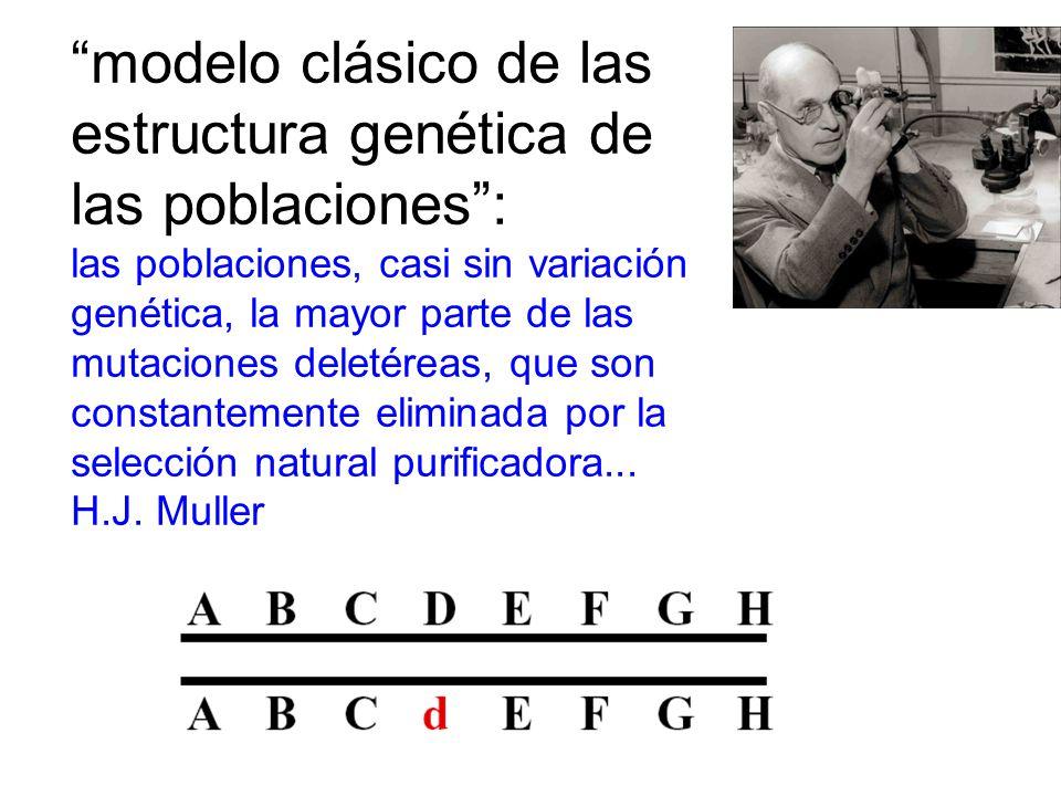 modelo clásico de las estructura genética de las poblaciones: las poblaciones, casi sin variación genética, la mayor parte de las mutaciones deletéreas, que son constantemente eliminada por la selección natural purificadora...