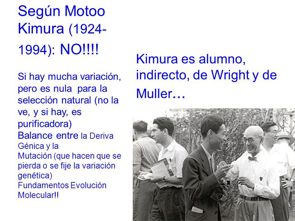 Según Motoo Kimura (1924- 1994): NO!!!.