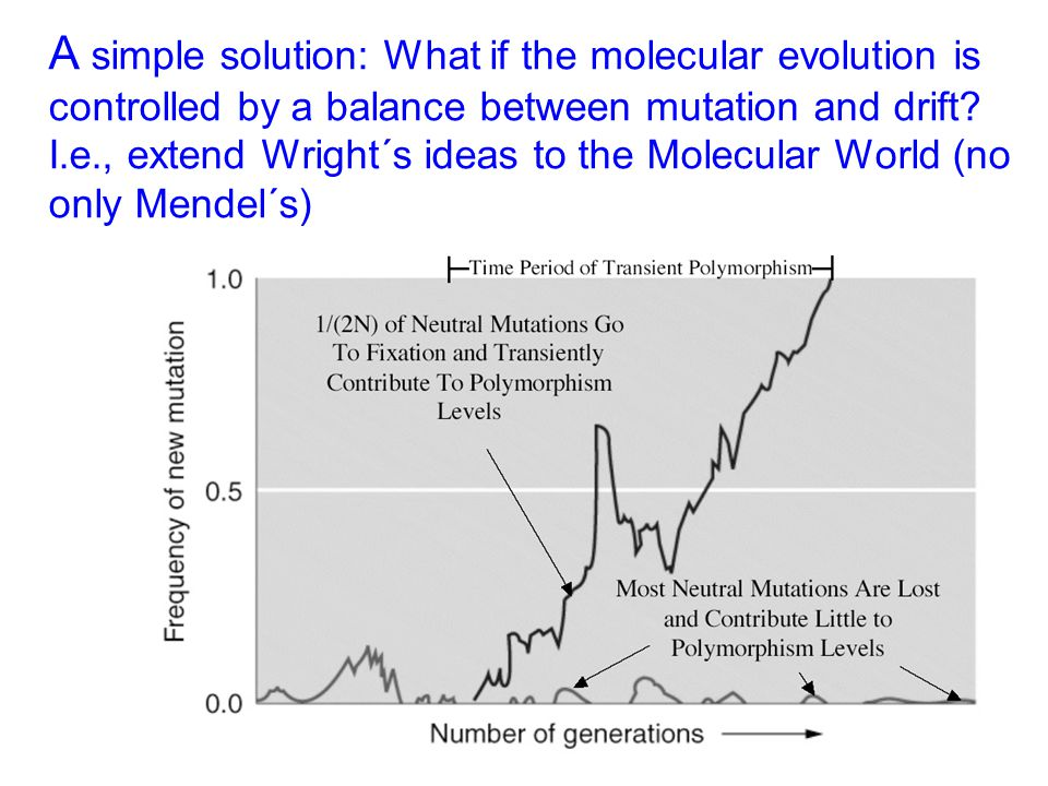 A simple solution: What if the molecular evolution is controlled by a balance between mutation and drift? I.e., extend Wright´s ideas to the Molecular