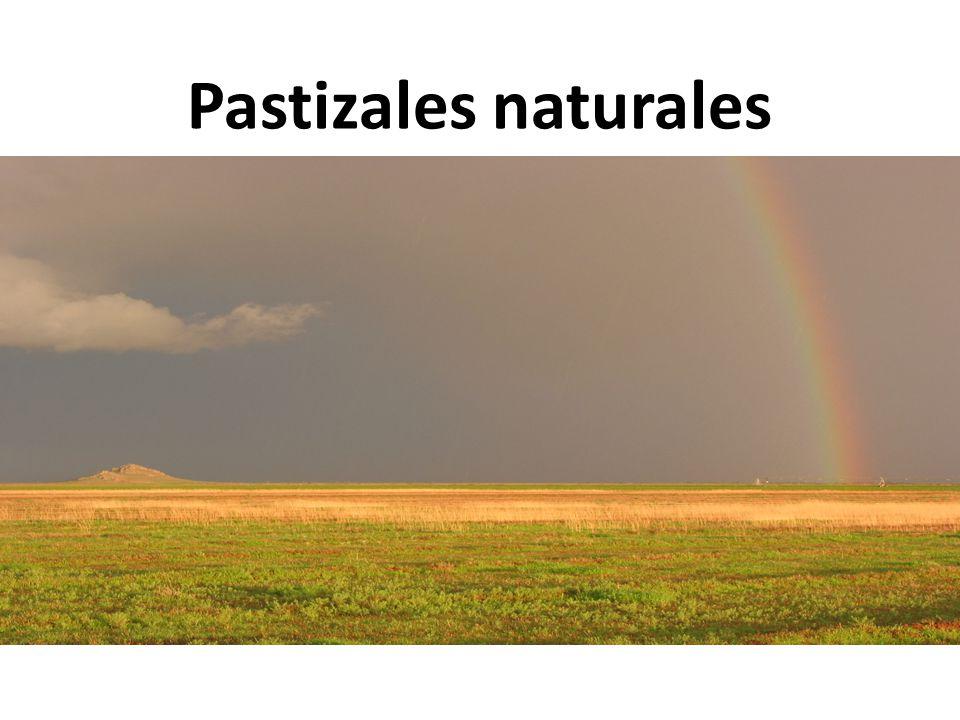 Los pastizales en México Ocupan el 5% del territorio nacional (SEMARNAT 2008)