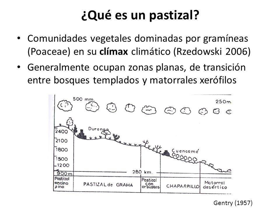 Pastizales en México (Rzedowski 2006) 10-12% del territorio nacional Principalmente en regiones semiáridas de clima fresco Precipitación: 300-600 mm (6-9 meses secos) Zonas planas o con poca inclinación De los 1,100 a los 2,500 m Suelos generalmente volcánicos Incluye: – Pastizal corto – Sabana (pastizal de clima caliente) – Páramo de altura – Zacatonal