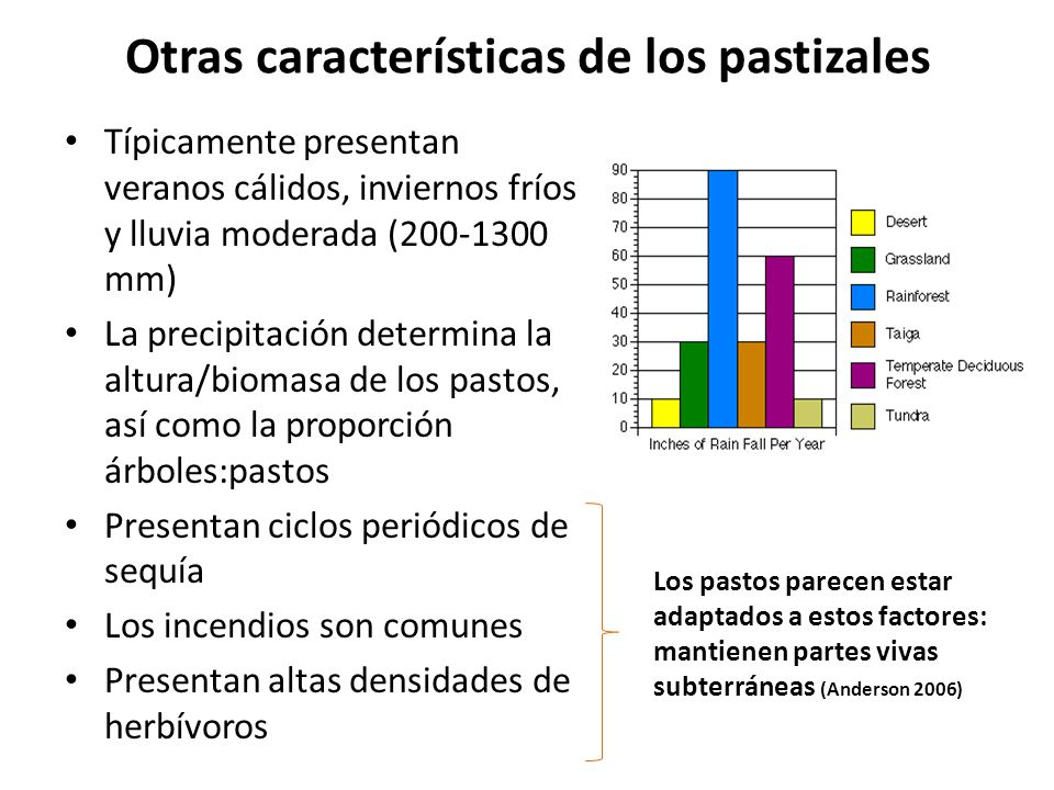 Origen de los pastizales Pastizales norteamericanos (Anderson 2006) : – El surgimiento de montañas creó un clima favorable (más seco) para los pastos hace unos 25 millones de años (Mioceno-Plioceno) – Los bosques ancestrales declinaron y los pastizales se extendieron – A finales del Pleistoceno (era postglacial) los pastizales se expandieron conforme los climas se hicieron más secos y cálidos – Probablemente los pastos coevolucionaron con los herbívoros Pastizales tropicales y subtropicales (Bond 2008) : – Las plantas C 4 (más eficientes que las C 3 para fijar carbono en ambientes cálidos) evolucionan en regiones calurosas en respuesta a una reducción de CO 2 atmosférico a principios del Mioceno – Abrupta aparición de pastizales C 4 en todo el mundo hace unos 6-8 millones de años, cuando se incrementó la aridez en todo el mundo