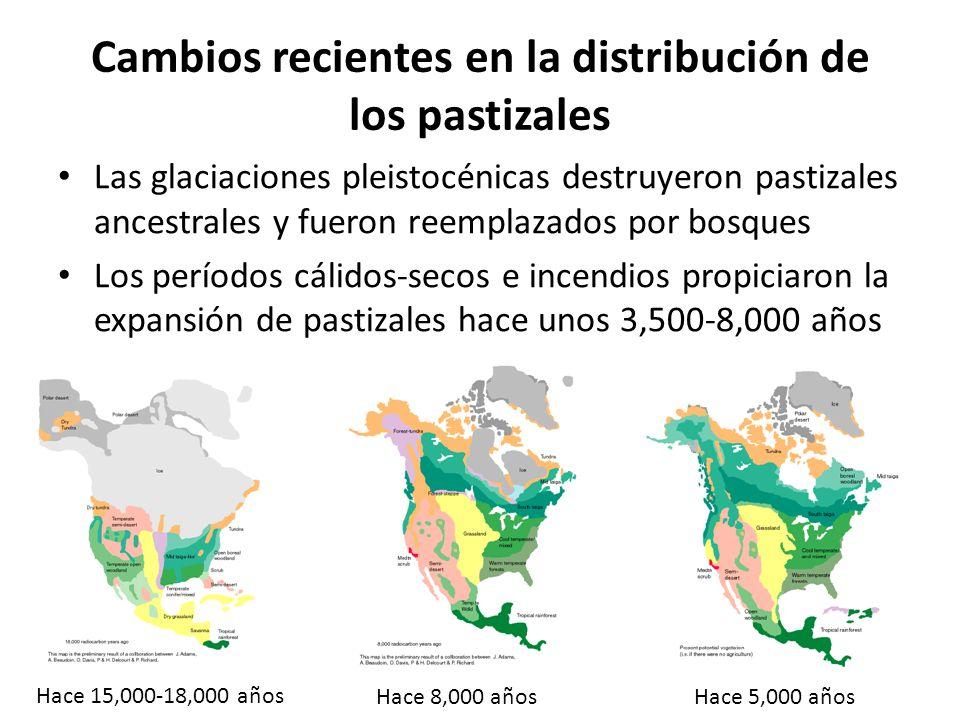 Asteraceae (familia del girasol) Herbáceas más comunes en pastizales Fabaceae (familia del frijol) Hoffmanseggia glauca Prosopis glandulosa Artemisia sp.