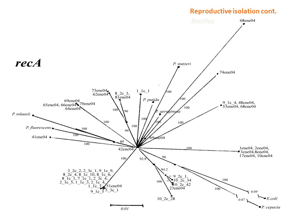 Pseudomona (4 species), Exiguobacterium (2 species) and Bacillus (6 species) from CCB are all clonal lineages in recent diversification, even in gener