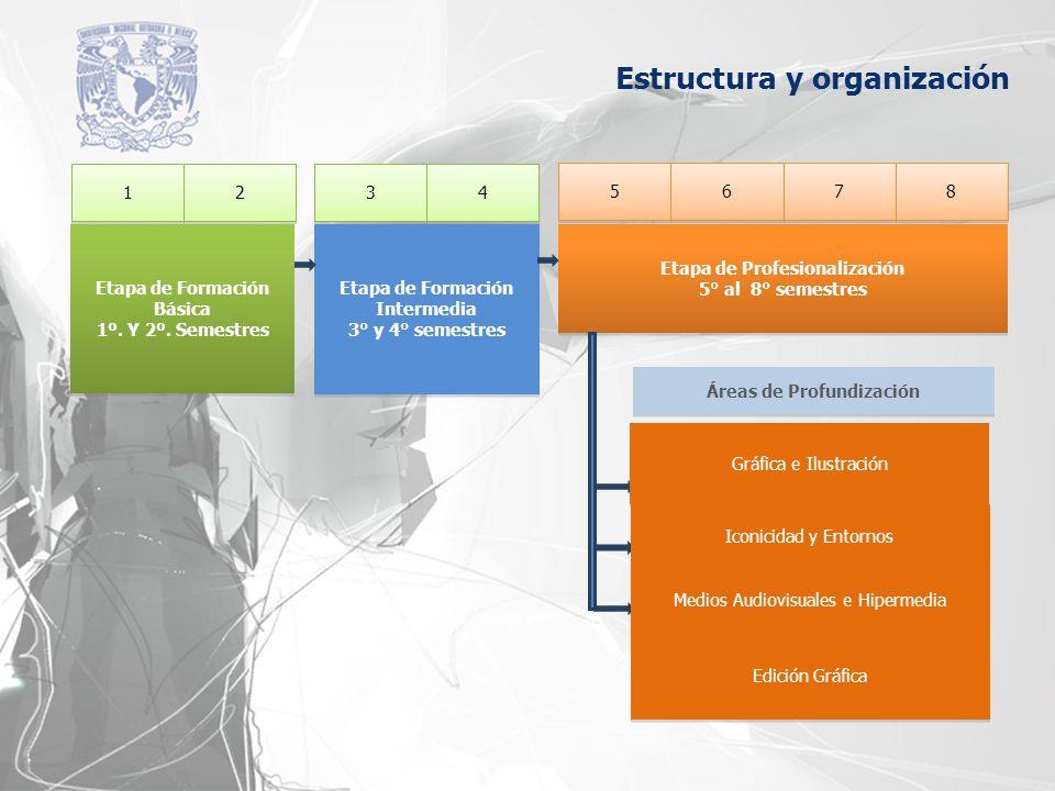 Estructura y organización 1 1 3 3 2 2 4 4 5 5 7 7 6 6 8 8 Etapa de Profesionalización 5° al 8° semestres Etapa de Profesionalización 5° al 8° semestre
