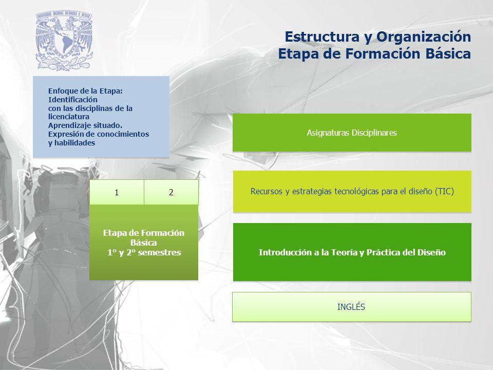 Estructura y Organización Etapa de Formación Básica Enfoque de la Etapa: Identificación con las disciplinas de la licenciatura Aprendizaje situado. Ex