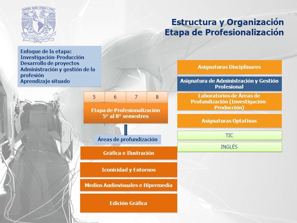 Estructura y Organización Etapa de Profesionalización 5 5 7 7 6 6 8 8 5° al 8° semestres Etapa de Profesionalización 5° al 8° semestres Áreas de profu