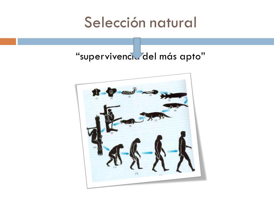 Selección natural supervivencia del más apto