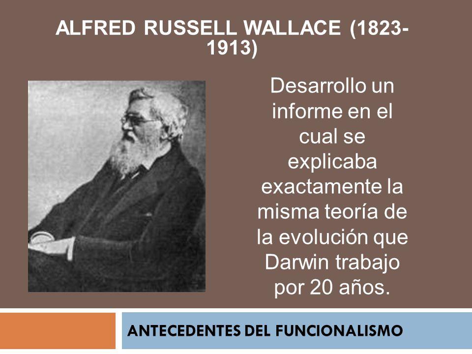ANTECEDENTES DEL FUNCIONALISMO ALFRED RUSSELL WALLACE (1823- 1913) Desarrollo un informe en el cual se explicaba exactamente la misma teoría de la evo
