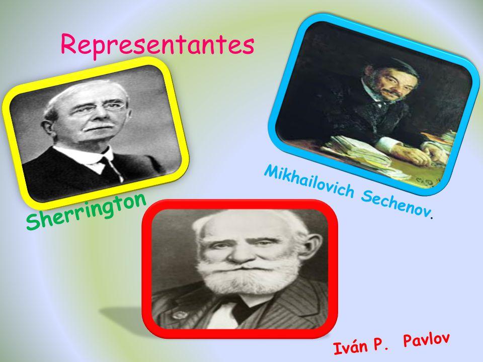 Representantes Sherrington Mikhailovich Sechenov. Iván P. Pavlov