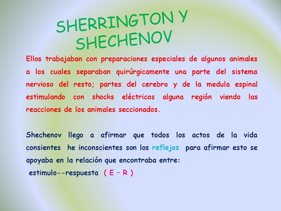 SHERRINGTON Y SHECHENOV Ellos trabajaban con preparaciones especiales de algunos animales a los cuales separaban quirúrgicamente una parte del sistema