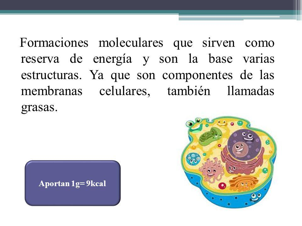 Formaciones moleculares que sirven como reserva de energía y son la base varias estructuras. Ya que son componentes de las membranas celulares, tambié