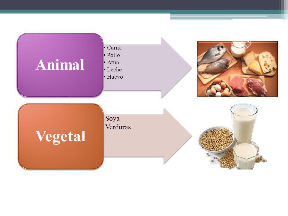 Carne Pollo Atún Leche Huevo Animal Soya Verduras Vegetal