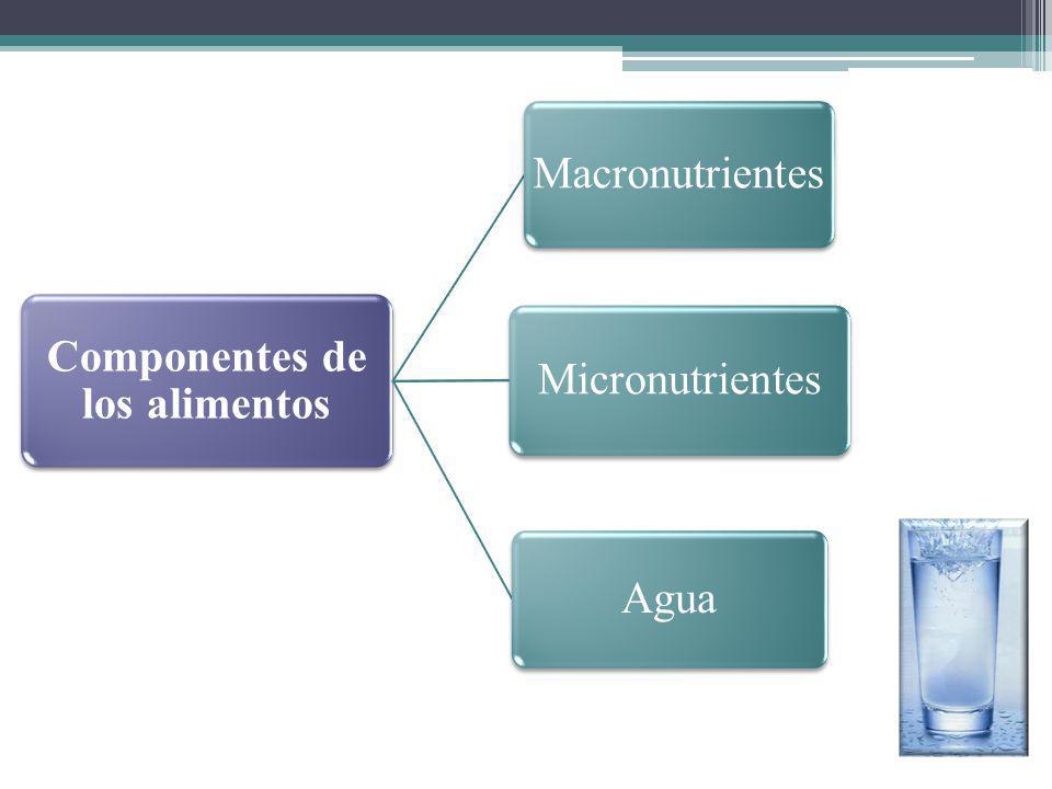 Componentes de los alimentos Macronutrientes Micronutrientes Agua