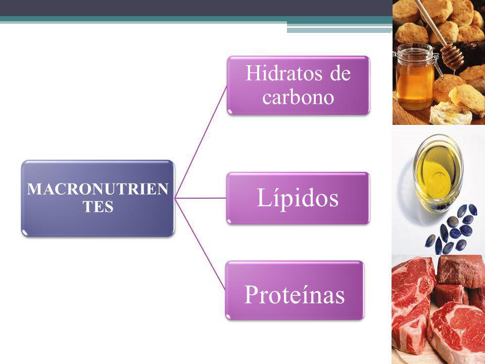 MACRONUTRIEN TES Hidratos de carbono Lípidos Proteínas