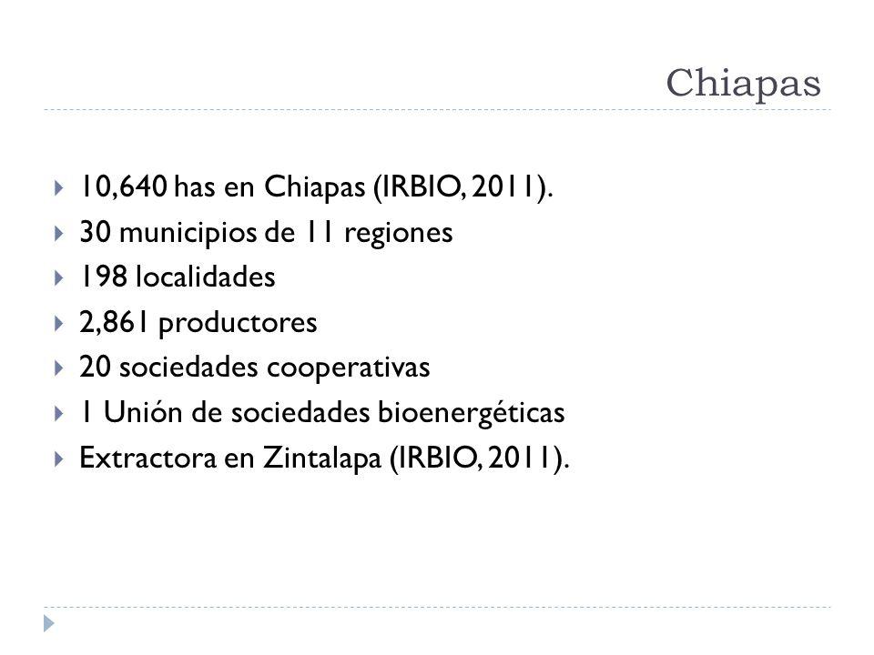 Chiapas 10,640 has en Chiapas (IRBIO, 2011). 30 municipios de 11 regiones 198 localidades 2,861 productores 20 sociedades cooperativas 1 Unión de soci