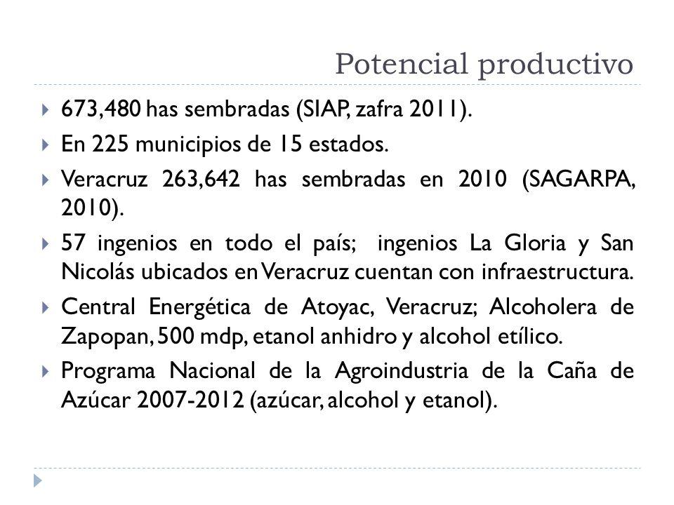 Potencial productivo 673,480 has sembradas (SIAP, zafra 2011). En 225 municipios de 15 estados. Veracruz 263,642 has sembradas en 2010 (SAGARPA, 2010)