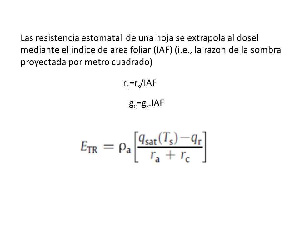 Las resistencia estomatal de una hoja se extrapola al dosel mediante el indice de area foliar (IAF) (i.e., la razon de la sombra proyectada por metro