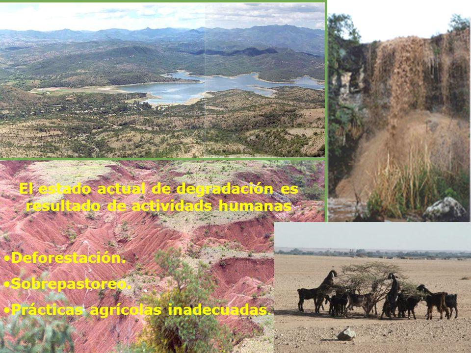 El estado actual de degradación es resultado de actividads humanas Deforestación. Sobrepastoreo. Prácticas agrícolas inadecuadas.
