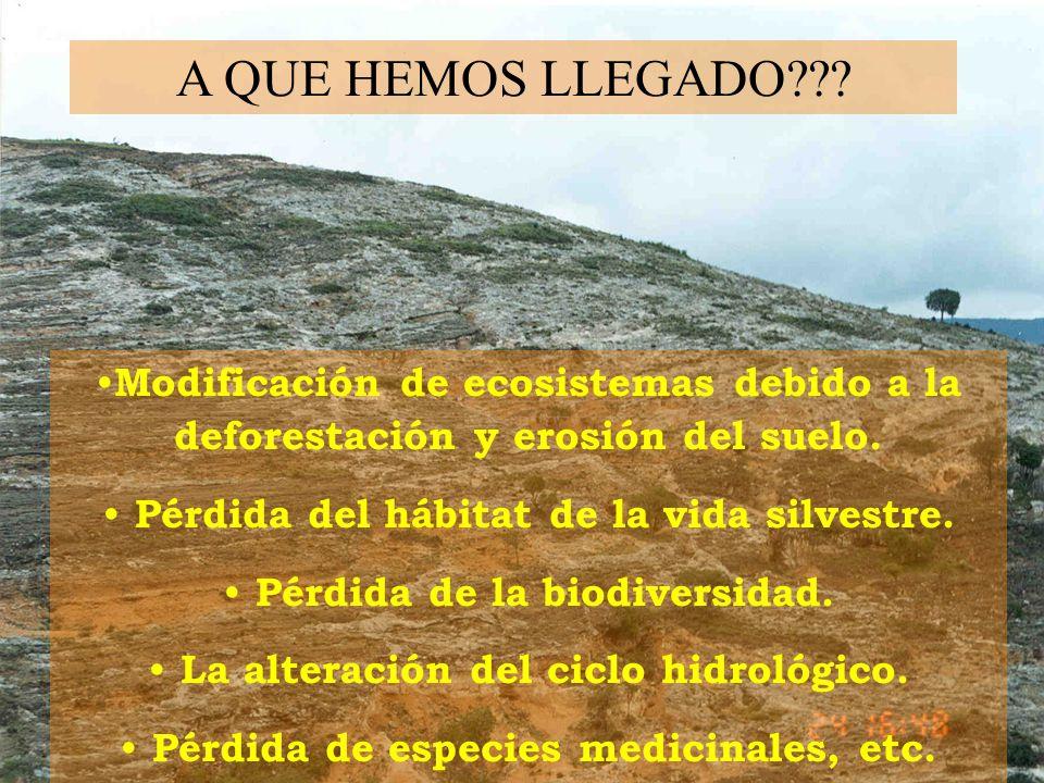 A QUE HEMOS LLEGADO??? Modificación de ecosistemas debido a la deforestación y erosión del suelo. Pérdida del hábitat de la vida silvestre. Pérdida de
