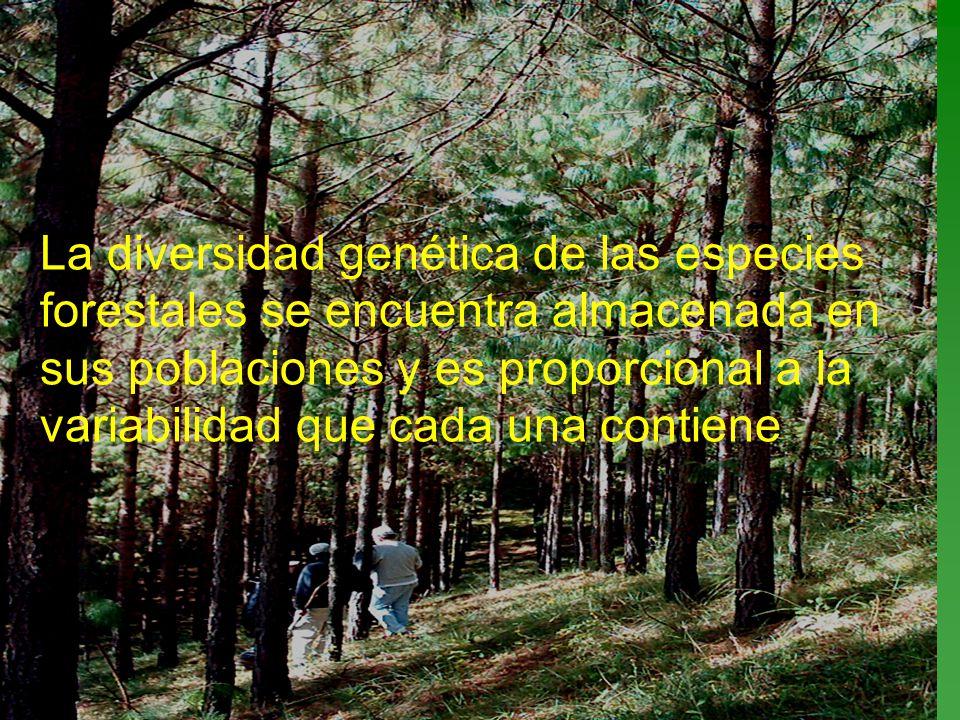 La diversidad genética de las especies forestales se encuentra almacenada en sus poblaciones y es proporcional a la variabilidad que cada una contiene