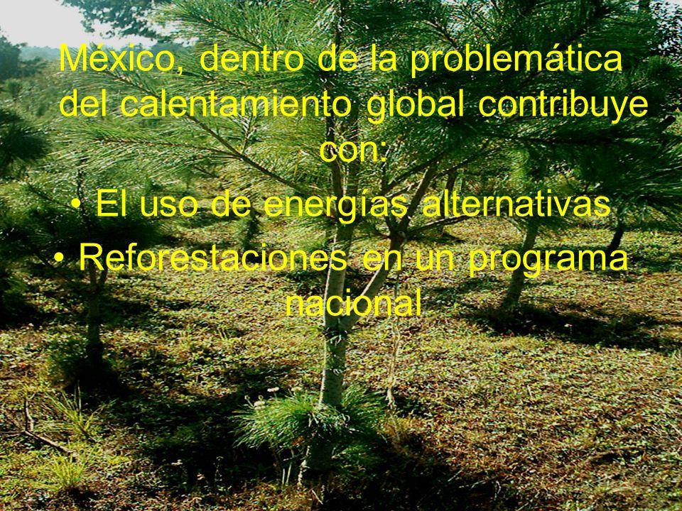 México, dentro de la problemática del calentamiento global contribuye con: El uso de energías alternativas Reforestaciones en un programa nacional