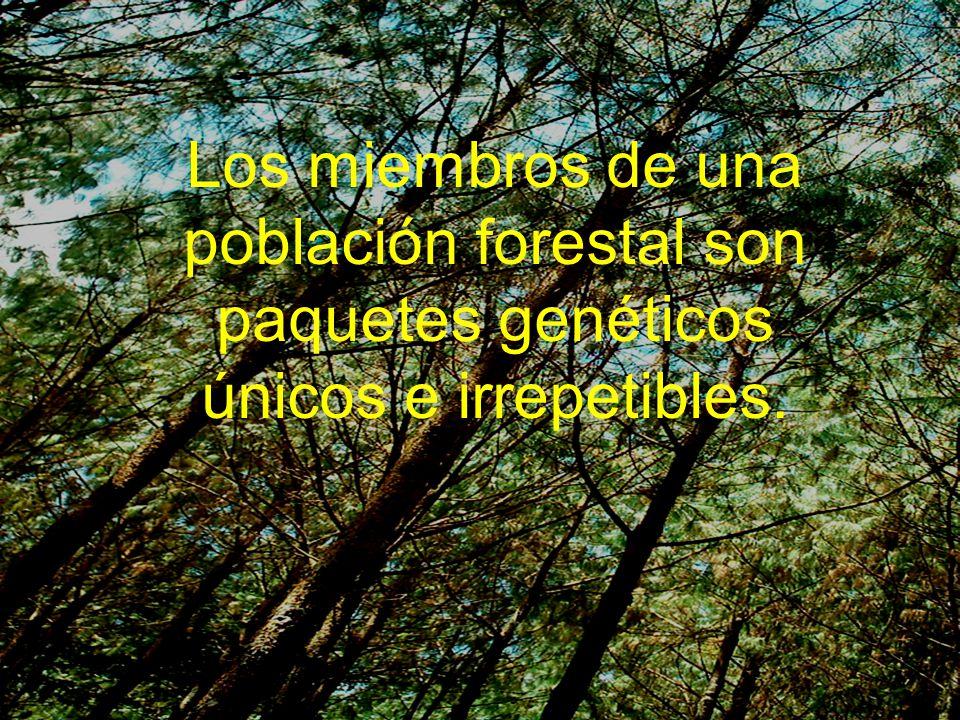 OBJETIVO Determinar la cantidad de carbono almacenado en la biomasa aérea de Pinus maximinoi Determinar la cantidad de carbono almacenado en la biomasa aérea de Pinus maximinoi entre la descendencia de las poblaciones en estudio y los componentes de cada población