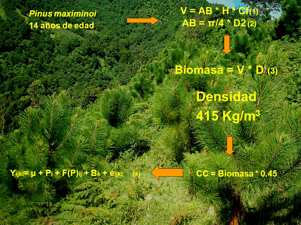 V = AB * H * Cf (1) AB = π/4 * D2 (2) Biomasa = V * D (3) CC = Biomasa * 0.45 Y ijkl = μ + P i + F(P) ij + B k + е ijkl (4) Pinus maximinoi 14 años de edad Densidad 415 Kg/m 3