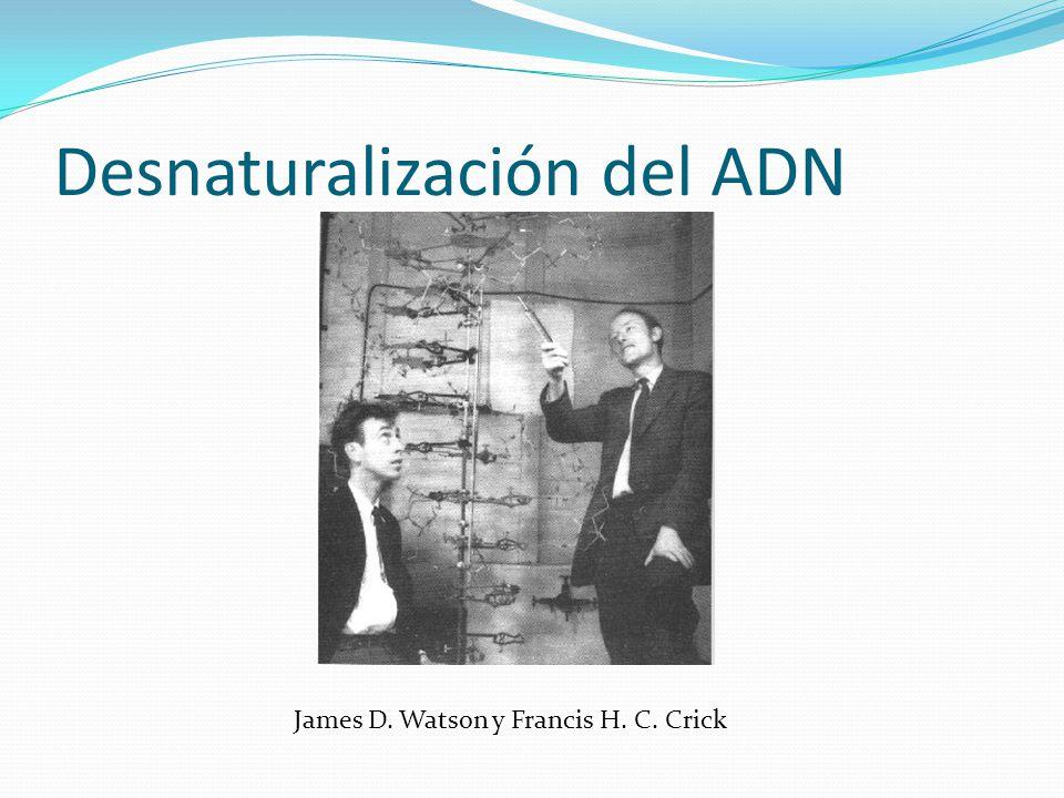 Desnaturalización del ADN James D. Watson y Francis H. C. Crick
