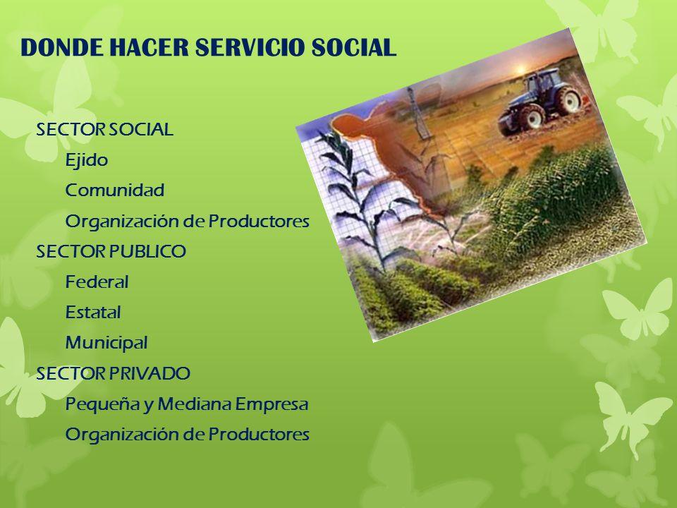 DONDE HACER SERVICIO SOCIAL SECTOR SOCIAL Ejido Comunidad Organización de Productores SECTOR PUBLICO Federal Estatal Municipal SECTOR PRIVADO Pequeña