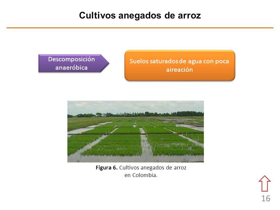 16 Cultivos anegados de arroz Descomposición anaeróbica Figura 6. Cultivos anegados de arroz en Colombia. Suelos saturados de agua con poca aireación