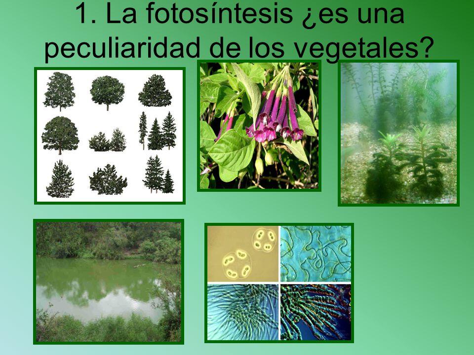 1. La fotosíntesis ¿es una peculiaridad de los vegetales?