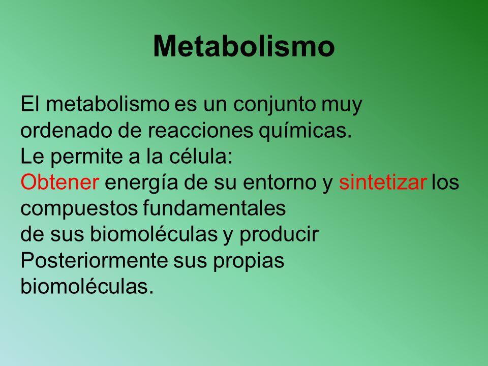 Metabolismo El metabolismo es un conjunto muy ordenado de reacciones químicas. Le permite a la célula: Obtener energía de su entorno y sintetizar los