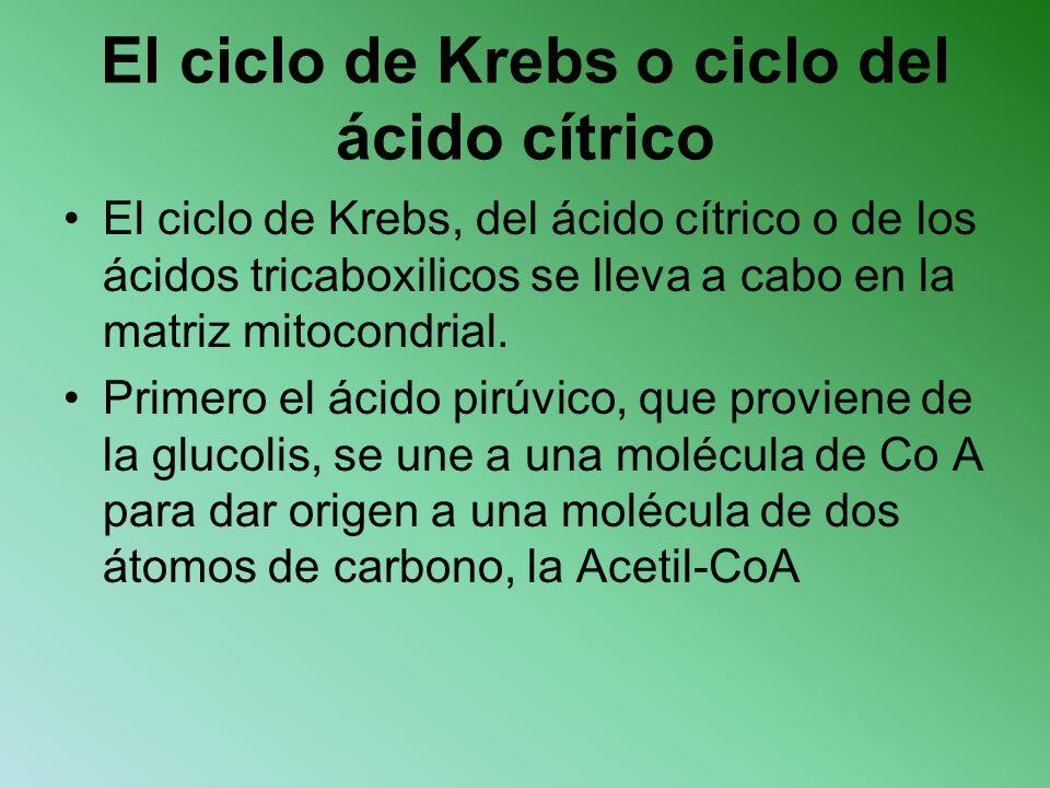 El ciclo de Krebs o ciclo del ácido cítrico El ciclo de Krebs, del ácido cítrico o de los ácidos tricaboxilicos se lleva a cabo en la matriz mitocondr