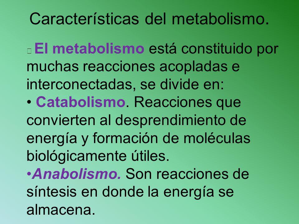 Características del metabolismo. El metabolismo está constituido por muchas reacciones acopladas e interconectadas, se divide en: Catabolismo. Reaccio