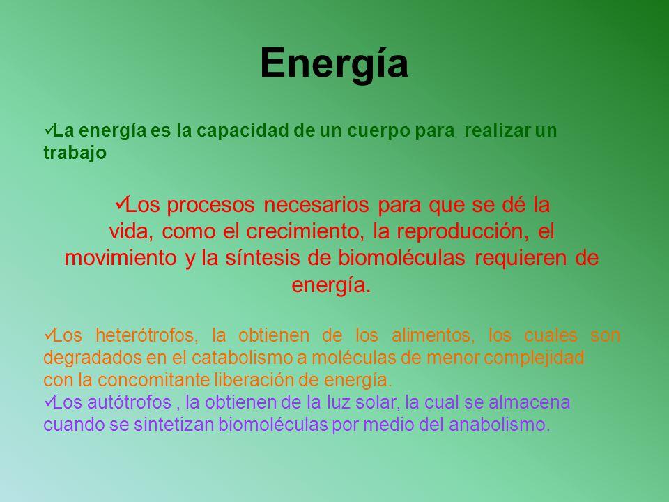 Energía La energía es la capacidad de un cuerpo para realizar un trabajo Los procesos necesarios para que se dé la vida, como el crecimiento, la repro