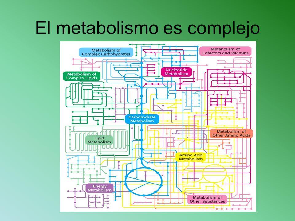 El metabolismo es complejo