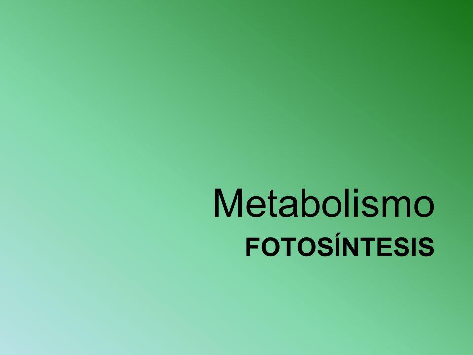 FOTOSÍNTESIS Metabolismo