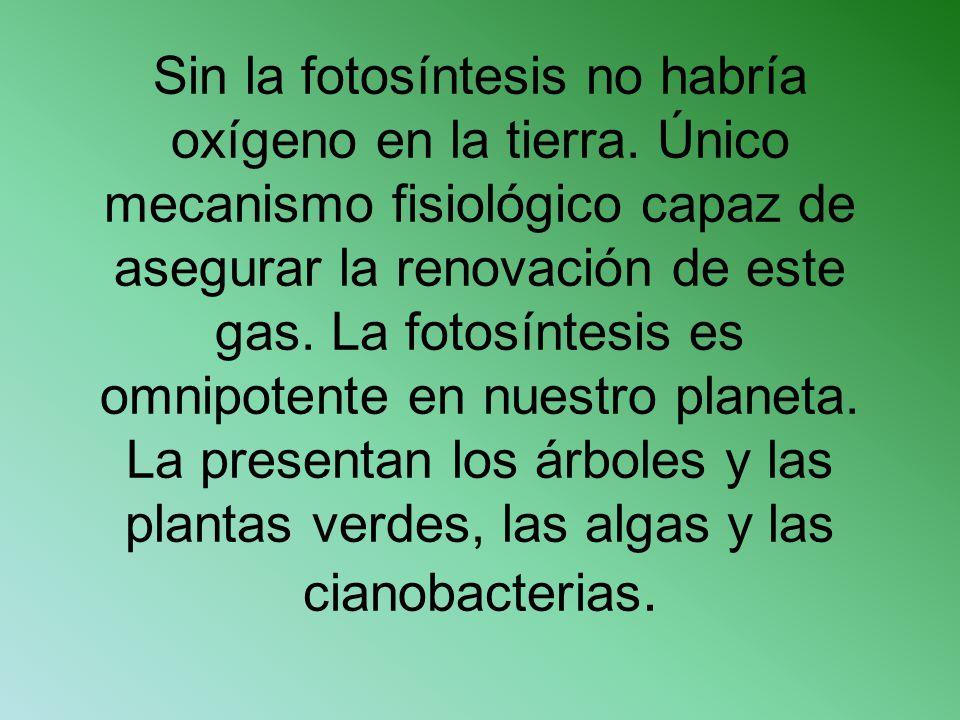 Sin la fotosíntesis no habría oxígeno en la tierra. Único mecanismo fisiológico capaz de asegurar la renovación de este gas. La fotosíntesis es omnipo