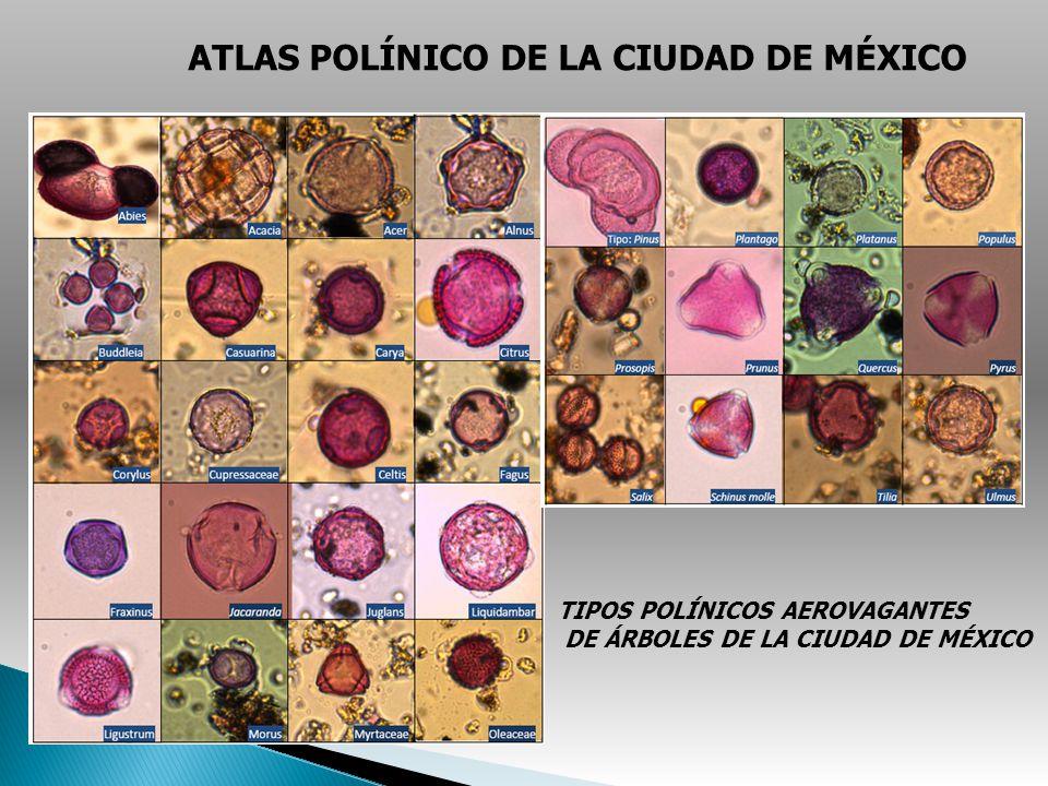 ATLAS POLÍNICO DE LA CIUDAD DE MÉXICO TIPOS POLÍNICOS AEROVAGANTES DE ÁRBOLES DE LA CIUDAD DE MÉXICO