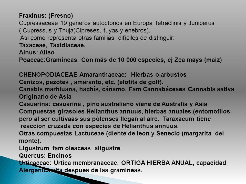 Fraxinus: (Fresno) Cupressaceae 19 géneros autóctonos en Europa Tetraclinis y Juniperus ( Cupressus y Thuja)Cipreses, tuyas y enebros). Asi como repre