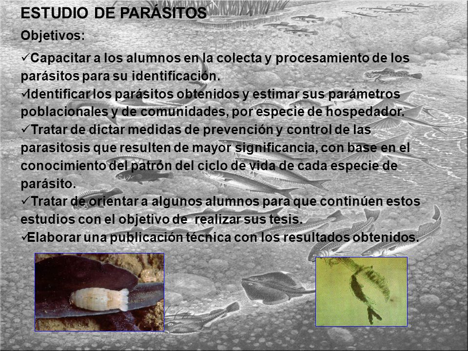 ESTUDIO DE PARÁSITOS Objetivos: Capacitar a los alumnos en la colecta y procesamiento de los parásitos para su identificación.
