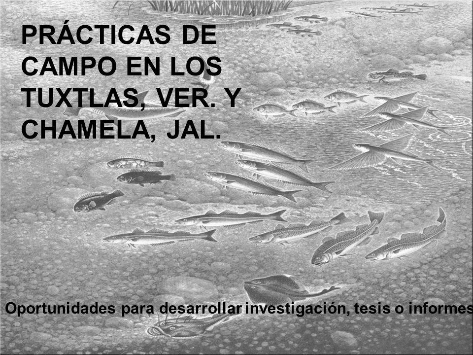 PRÁCTICAS DE CAMPO EN LOS TUXTLAS, VER.Y CHAMELA, JAL.
