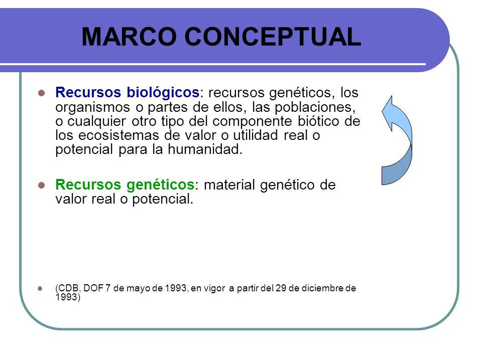 MARCO CONCEPTUAL Recursos biológicos: recursos genéticos, los organismos o partes de ellos, las poblaciones, o cualquier otro tipo del componente biót