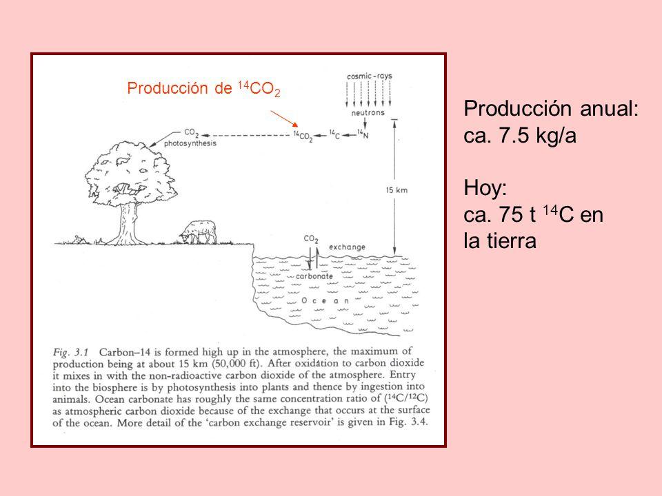 Producción de 14 CO 2 Producción anual: ca. 7.5 kg/a Hoy: ca. 75 t 14 C en la tierra