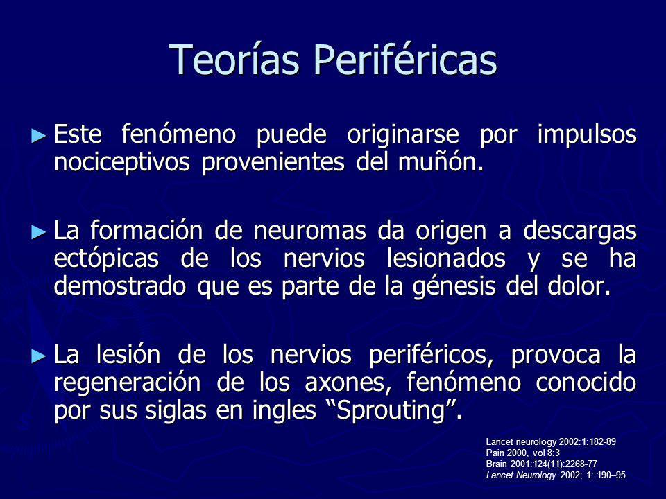 Teorías Periféricas Este fenómeno puede originarse por impulsos nociceptivos provenientes del muñón. Este fenómeno puede originarse por impulsos nocic