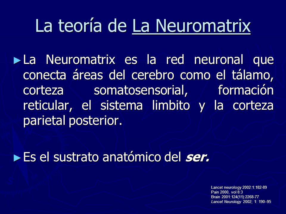 La teoría de La Neuromatrix La Neuromatrix es la red neuronal que conecta áreas del cerebro como el tálamo, corteza somatosensorial, formación reticul