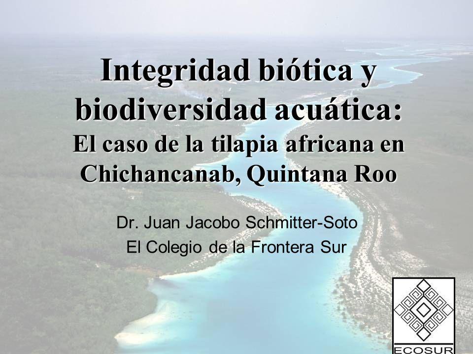 Integridad biótica y biodiversidad acuática: El caso de la tilapia africana en Chichancanab, Quintana Roo Dr. Juan Jacobo Schmitter-Soto El Colegio de