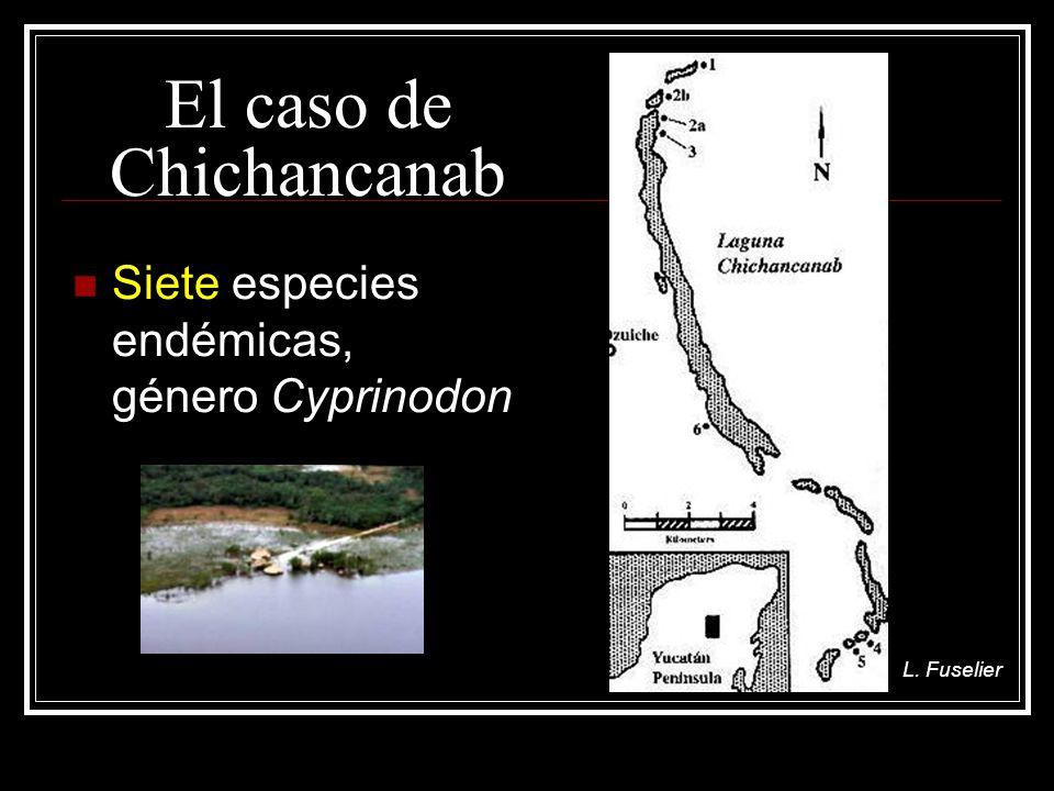 El caso de Chichancanab Siete especies endémicas, género Cyprinodon L. Fuselier